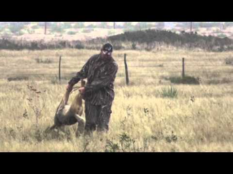 Coyote Hunting with the Extreme Rabbit Distress Call