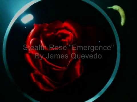 Stealth Rose Emergence