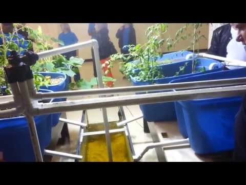 Aquaponics at Temple University Ambler Campus - Growing Food with Fish