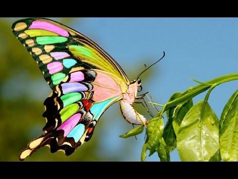 Таинственные бабочки в мире