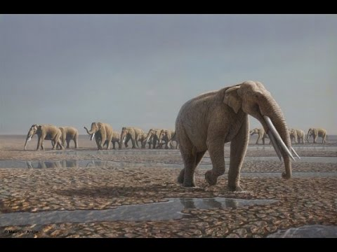 Life on the Baynunah River: Abu Dhabi 7 Million Years Ago