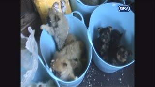 RSPCA exposes puppy farms
