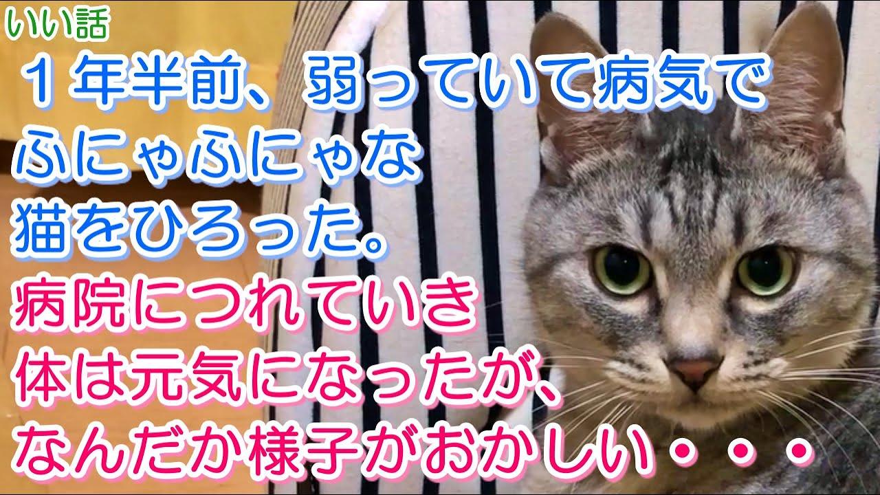 【猫のいい話】1年半前、弱っていて病気でふにゃふにゃな猫をひろった。病院につれていき体は元気になったが、なんだか様子がおかしい・・・