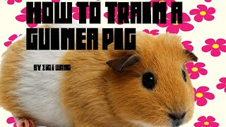How to Train Your Guinea Pig - Pet Care [1]