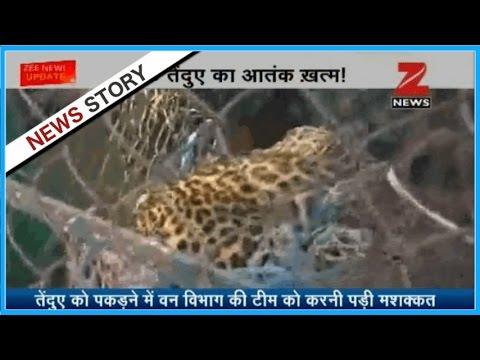 Panther reaches a crowded place in West Bengal
