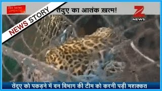 Panther reaches a crowded place in West Bengal's Raiganj area, public fears