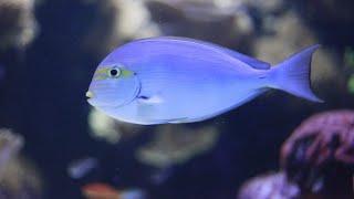 Fish Tank Sounds