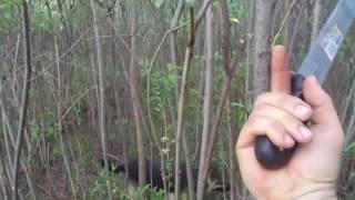 видео Забор из ивы своими руками