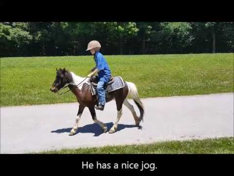 "FOR SALE ""Max"" 13yr 14.3h Palomino Tennessee Walking Horse Gelding from YouTube · Duration:  6 minutes 35 seconds"