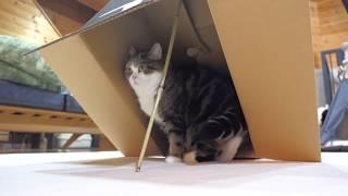 罠にかかるまると、助けるはな。Maru is caught in the trap, and Hana helps him.