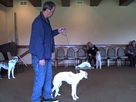 Dog Show Training Class
