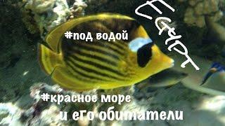 Жизнь под водой. Красное море. Шарм Эль Шейх(Любуемся обитателями подводного мира Красного моря. С помощью трубки и маски можно увидеть на глубине 1..., 2012-09-30T10:46:34.000Z)