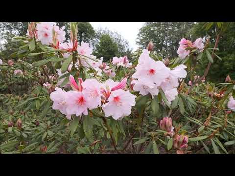 Garden Visit in June - Caerhays