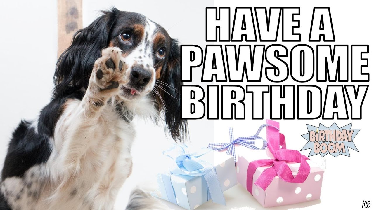 happy birthday images with dogs Funny Happy Birthday Memes of Dogs   YouTube happy birthday images with dogs