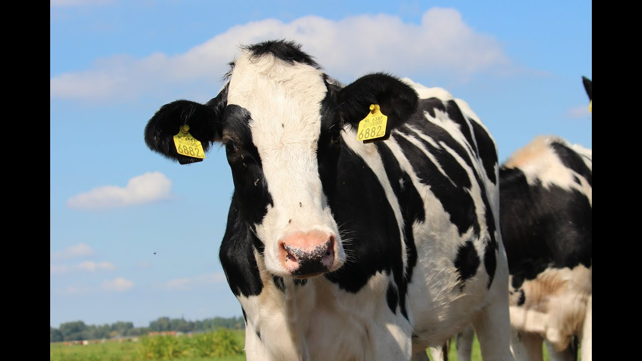 holstein black personals Postcode zip code germany - geopostcodes postal code - zip codes download zipcodes listing by countries buy postcodes of the.