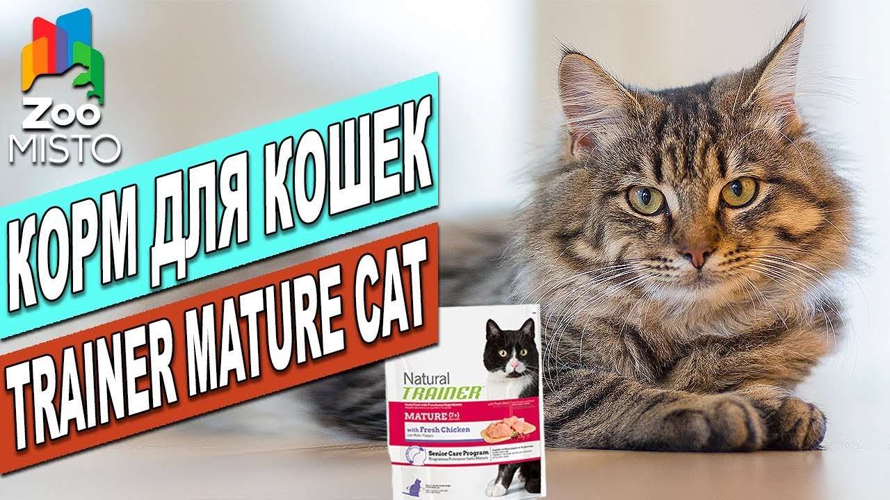 Корм для кошек Пурина Феликс   Обзор корма для кошек   Purina .