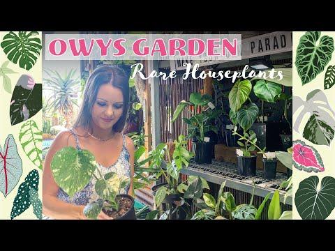 Rare Houseplants @ Owys Garden Australia 🌴🐨🌺☀️🌿