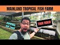 Mainland Tropical FISH FARM TOUR! Jumping koi fish!