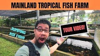 Mainland Tropical FISH FARM TOUR! Jumping koi fish!