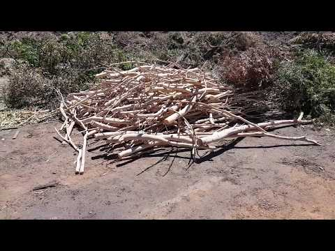 back-at-the-rubbish-dump-garden-waste-section---free-salmon-gum-tree-winter-firewood