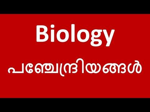 MOST IMPORTANT | Eye | Ear | Nose | Tongue | Skin | Human Body | Biology | Kerala PSC Coaching