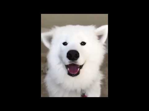 Funny Cat/DOG Videos / CAT/DOG VINE / FUNNY COMPILATION / CAT /DOG