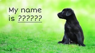На какую букву называют породистых щенков?