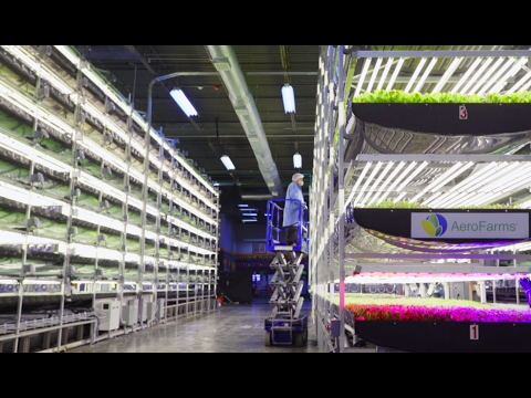 Vertical farming at AeroFarm 🌱 | Curbed Tours