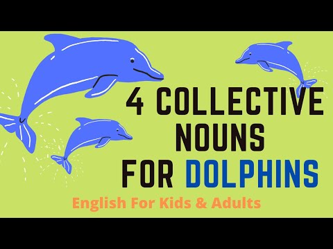 4 Collective Nouns For Dolphins
