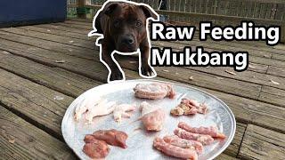 Raw Chicken Feet, Liver, Gizzards, Neck | Raw Feeding Mukbang