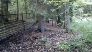 Indy - Karelski Pies Na Niedźwiedzie - Karelian Bear Dog Indy
