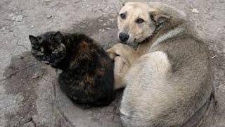 Бродячие собаки и кошки в Германии. Жизнь в Германии.