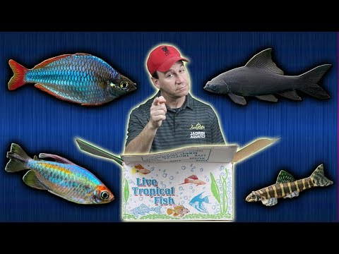 Massive Tropical Fish Store Un-boxing 1000s Of Fish Pt1