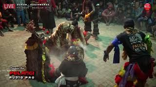 Bantengan Suro Gwalak Tapi Newwenengne - New Wijoyo Putro Live Dukuh 2019