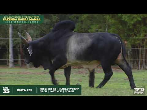 LOTE 35