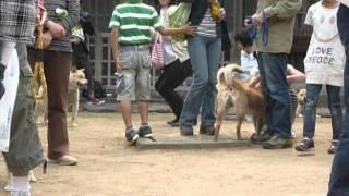 山陰柴犬保存会が飼い主の為に勉強会を開いてくれてます 場所は湯梨浜町...