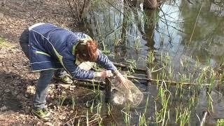 Рыбалка на карася, ловля  весной на пружины. My fishing