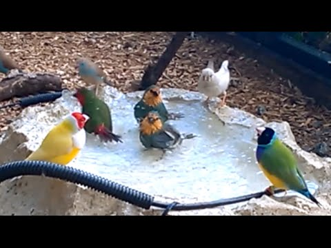 How to build a simple aviary watering/bathing system for finches