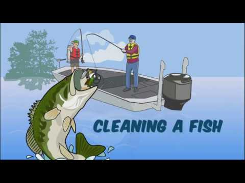 LDWF - Fish Cleaning