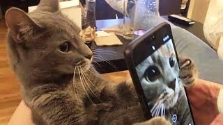 Funniest Cats   Don't try to hold back Laughter   Funny Cats Life