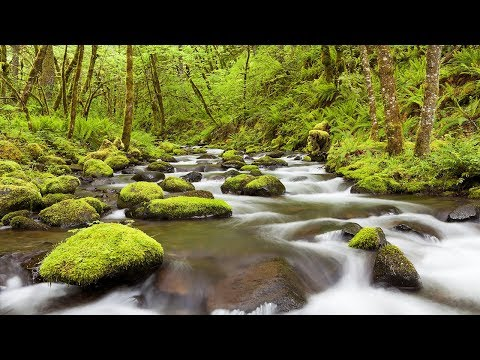 White Noise, Gentle Stream, Relaxing Sounds, Nature Sound, Sleep Sounds, Insomnia, ☯3377
