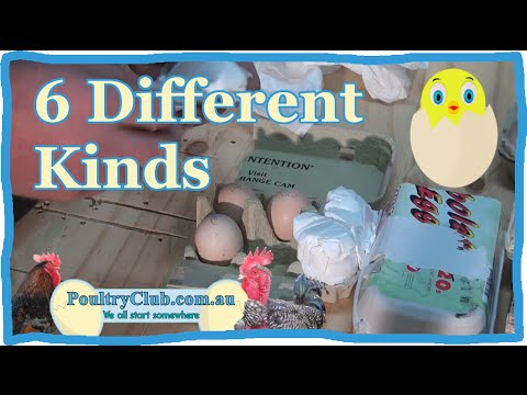 Hatching Eggs - Unboxing and Review 01 - 6 Different Kinds