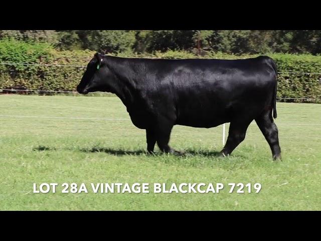 Vintage Angus Lot 28A