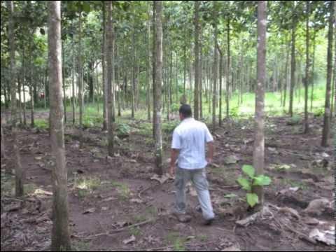 Panama Teak Forestry Meeting 2014