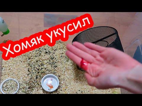 Хомяк укусил до крови во время уборки