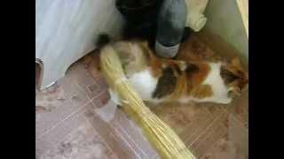 как удовлетворить кошку