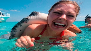 10 habitantes mas peligrosos del océano   los mejores top 10