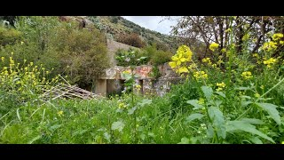 الطبيعة والجمال       ربيع شمال الاردن  وادي الريان  2020