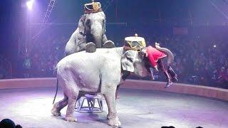 Elephants act in Circus.Индийские Слоны