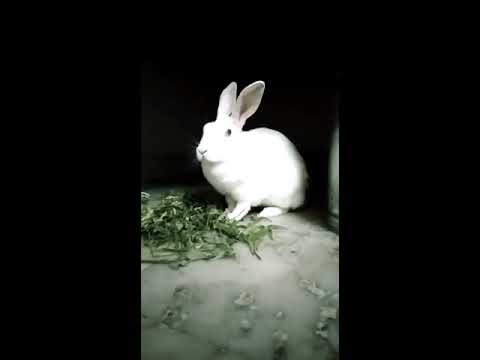 Cute Rabbit Feeding Time
